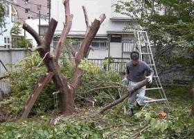 13.面倒な庭木の撤去作業は建築99にぜひお任せください